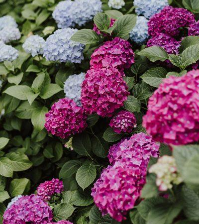 jardins_brisson_plantes